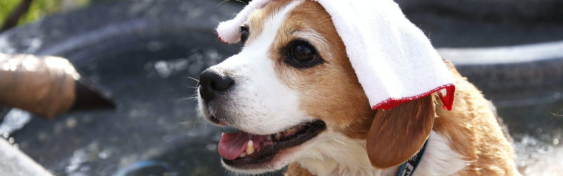 犬専用お風呂