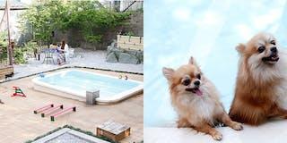 温泉プール付ドッグラン