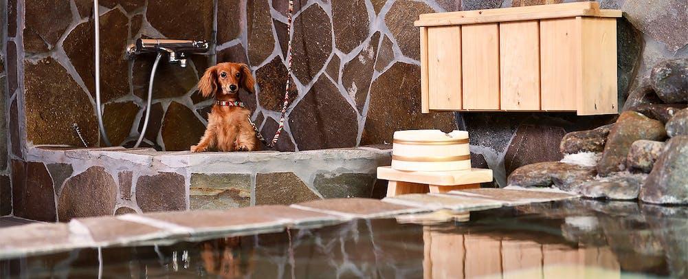 「湯布院ガーデンホテル アジサイの湯」の画像検索結果