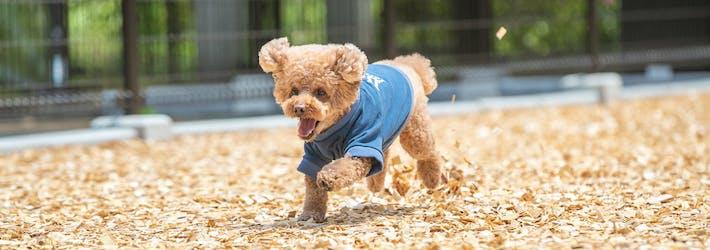 愛犬と一緒に格別なひとときを過ごす コレドール湯河原 Dog&Resort(神奈川県/足柄下)