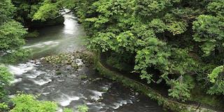 渓流の眺望