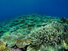 サンゴ保護活動