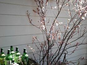 オーベルッジュにも春が。