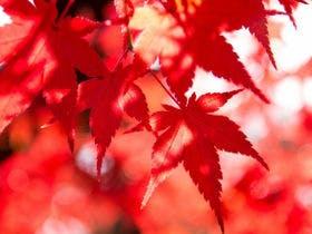 秋の紅葉をお楽しみください