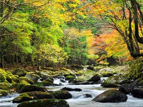 紅葉時期の滑沢渓谷。。