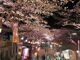 鬼怒川温泉 夜桜まつり
