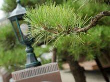 【卒業旅行】函館湯の川温泉で卒業旅行