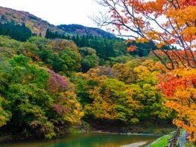 秋の周辺風景