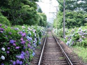 初夏は紫陽花、新緑が彩る自然豊かな強羅へ