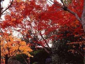 11月中旬頃には秋らしい風景が