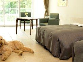 【ドッグフレンドリールーム】愛犬と素敵な時間を「ラ・フォーレプラン」夕・朝食付き