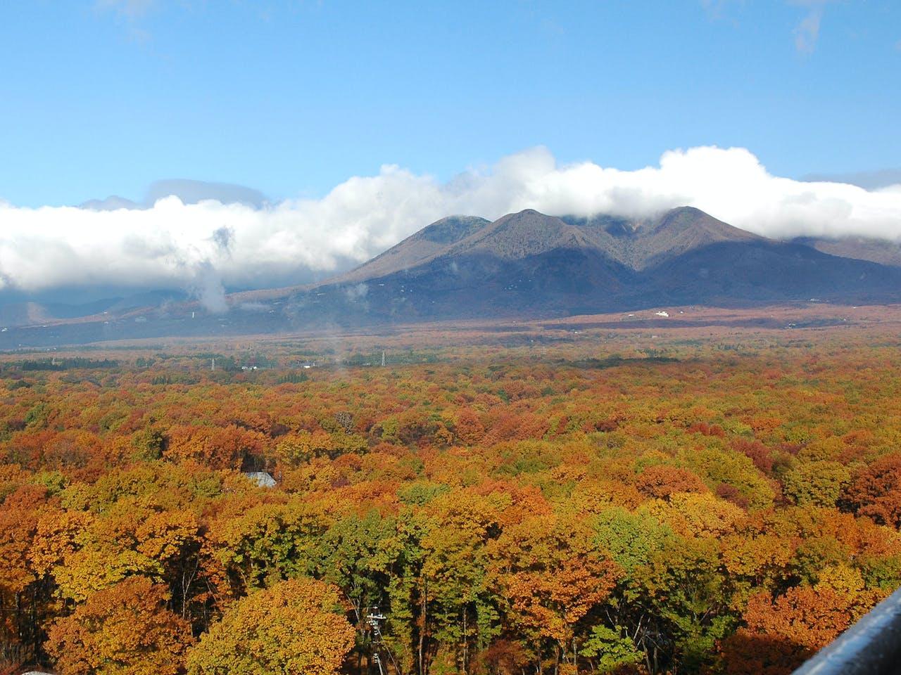 屋上展望台からの景色(紅葉)