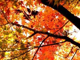 長湯周辺の美しい紅葉