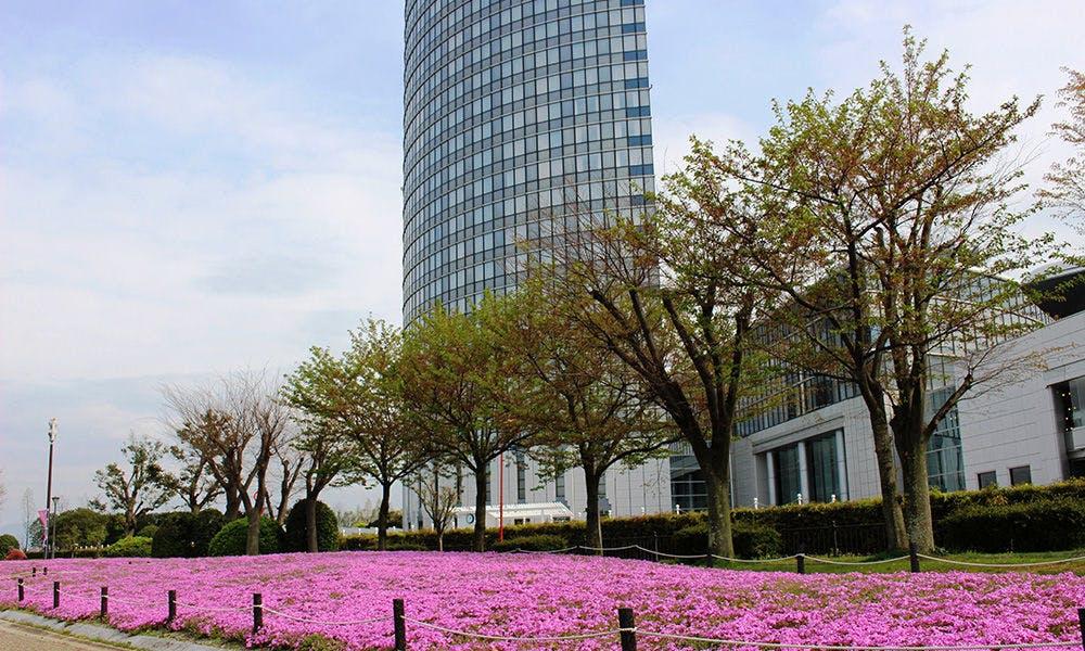 ホテル周辺の芝桜