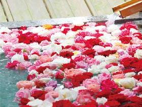 1000輪のバラに包まれて…バラ風呂