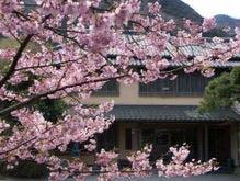 河津桜越しの当館玄関