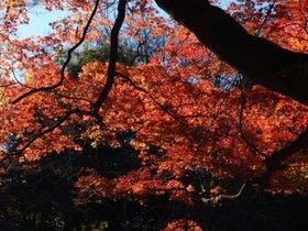 井の頭公園紅葉