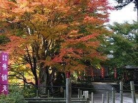安来清水寺の紅葉