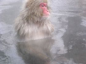 お行儀良く手をそろえて入浴中のお猿さん