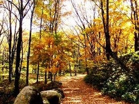 紅葉の散策道