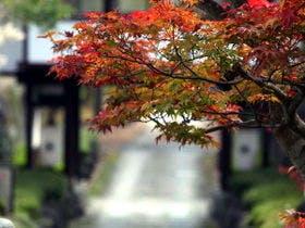 庭園の紅葉の見ごろは例年10月中旬すぎから