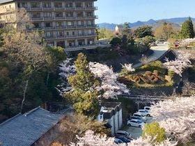 兆楽の桜 満開