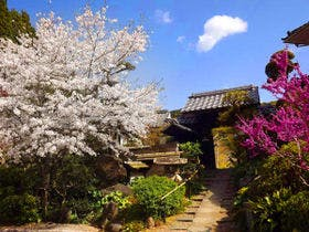 桜の時期のみどり荘外観