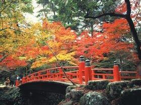 秋の紅葉谷公園