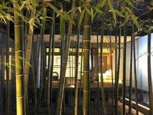 竹取物語を彷彿とさせる竹林
