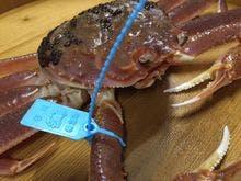青タグ付「加能蟹・かのうがに」イメージ