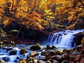 蓼科の名所「大滝」秋の紅葉
