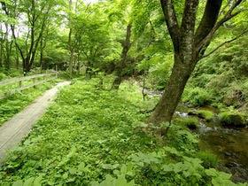 渓流・散策路