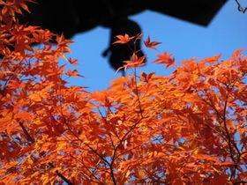 京都秋イメージ