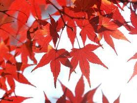 紅葉にうっとり
