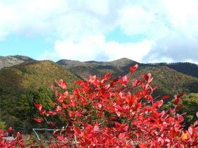 *周辺の秋風景