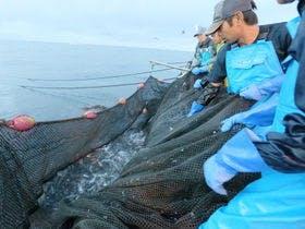 自社経営する定置網漁