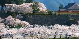 春の篠山城跡