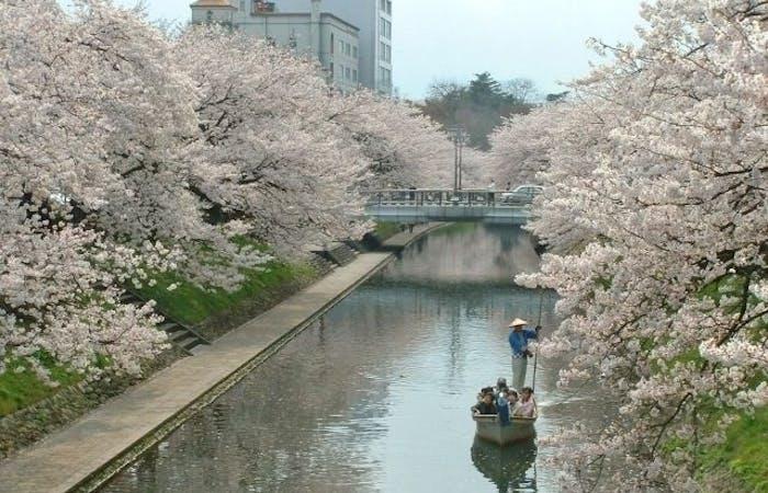 富山市お花見2021/富山市・情緒あふれる桜景色を満喫!お花見おすすめ ...