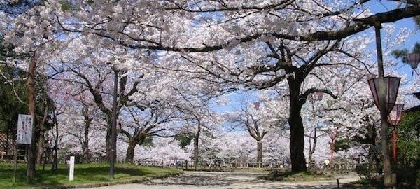 砺波・小矢部お花見2021/砺波・小矢部・情緒あふれる桜景色を満喫!お ...