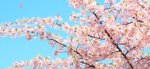 この春おすすめ!特集