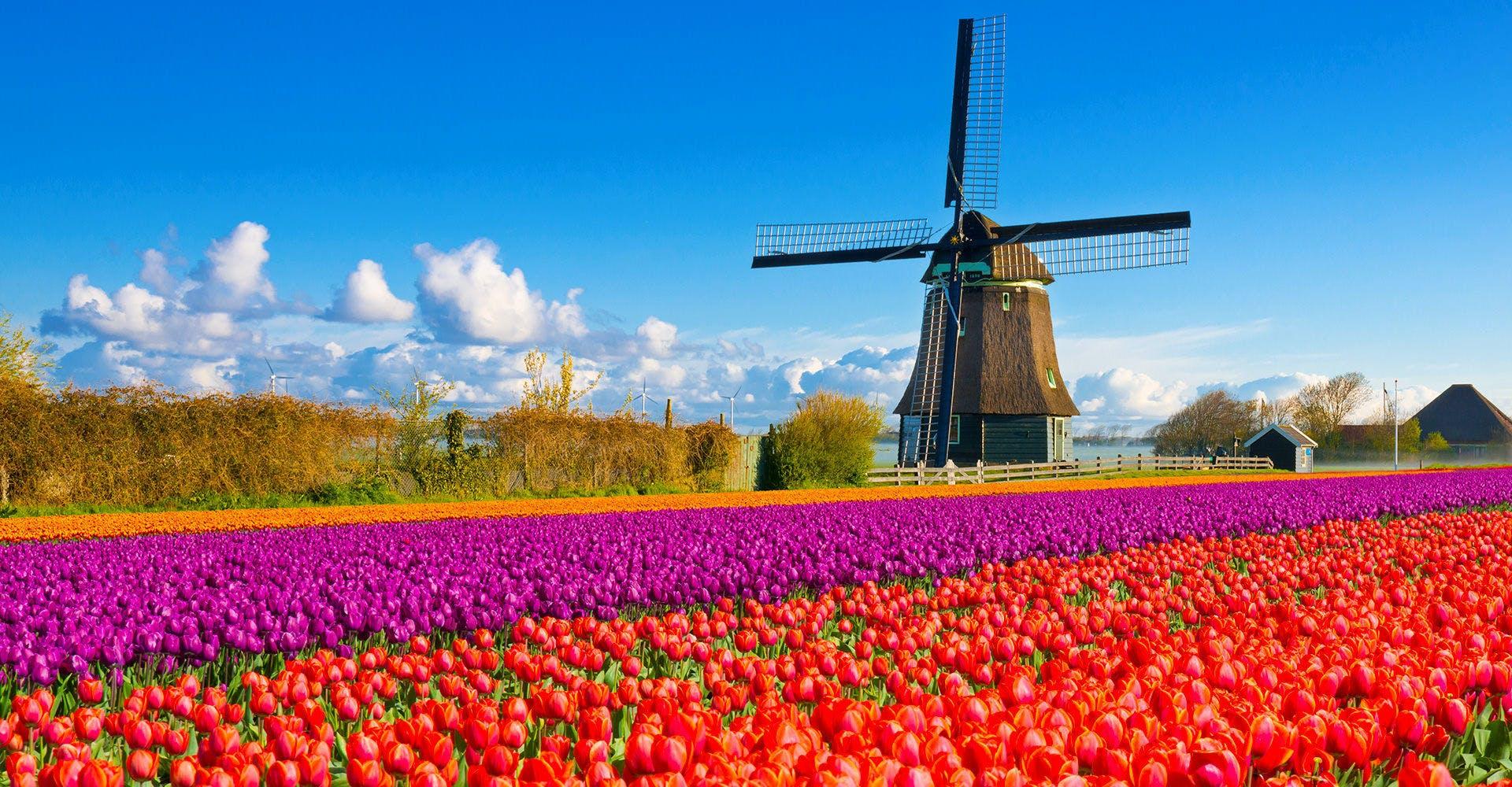 オランダのホテル 海外ホテル予...