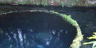 柿田川水系の水道水